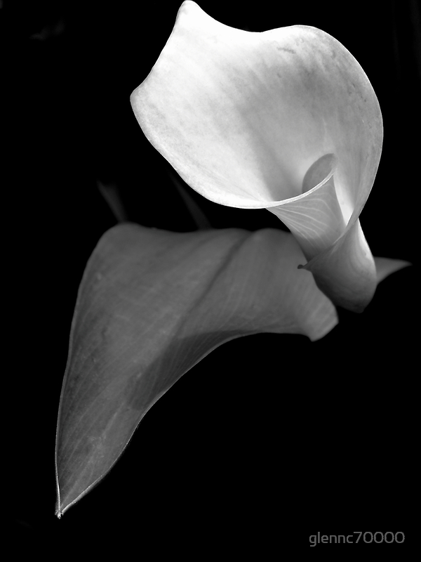 Monotone Bloom by Glenn Cecero