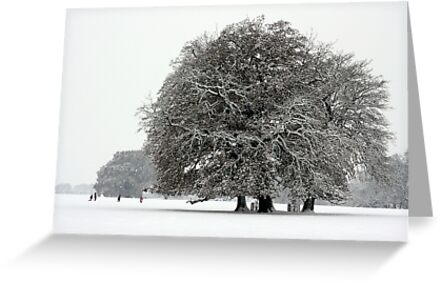 Winter in Petworth Park by Emma S
