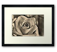 Graceful Rose Framed Print