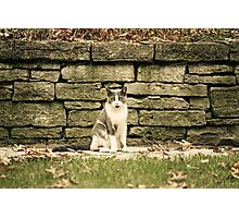 Front Yard Cat  Photographic Print