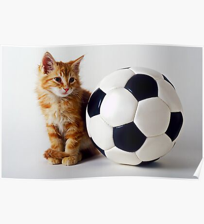Orange and white kitten with soccer ball Poster