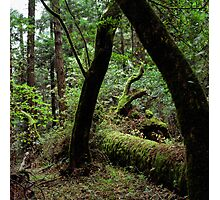 Dipsea Trail, Muir Woods National Monument Photographic Print