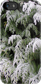 Frosty evergreen hedge for iPhone by Philip Mitchell