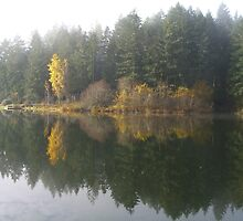 Lake and fall trees reflection by Phil  Neuman