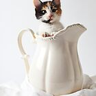 Calico kitten in white pitcher by Garry Gay