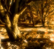 Forest in Autumn by Harry Purves