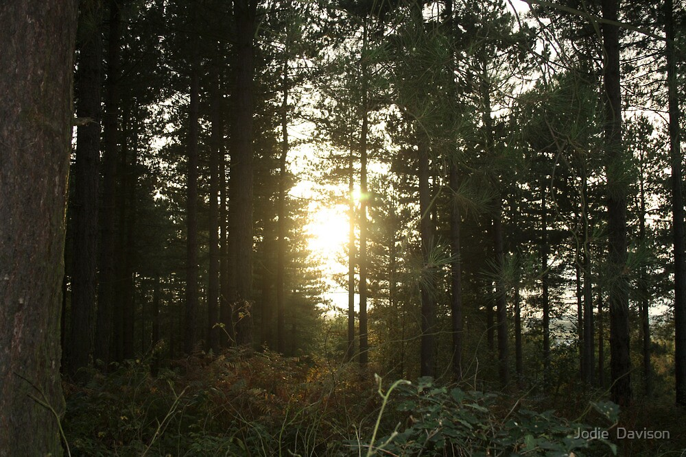 Looking towards the sun by Jodie  Davison
