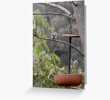 Australian backyard wildlife Greeting Card