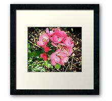 Governor General's rose 11 Framed Print