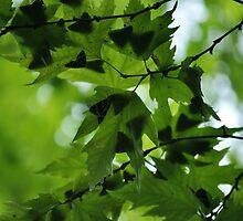 Absolute Green by Katerina Vorvi