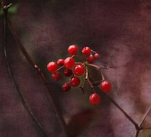 Berry Delight by Julesrules