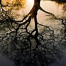 Tree reflection by Gary Rayner