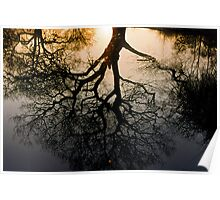 Tree reflection Poster