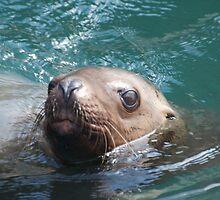 Seal, Juneau Alaska by creativegenious