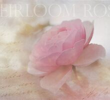 Heirloom Pink Rose by Lynn Starner