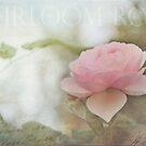 Heirloom Rink Rose II by Lynn Starner