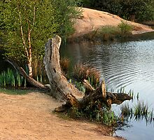 Fallen tree on the waters edge  by Gary Rayner