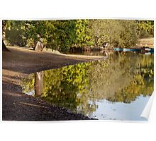 Early morning sun light up the trees reflected in the lake Poster