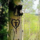 Aspen Heart by NovaCynthia