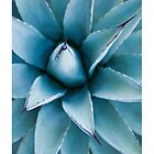 Agave Plant Detail by Tim McGuire