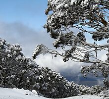 Mt Baw Baw by Di Jenkins