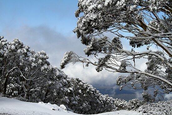 Mt Baw Baw by Di Jenkins