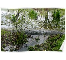 An overflow from a forest pond. Poster
