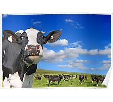 Happy Cows Poster