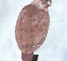 Red-Tailed Hawk by CaringArt
