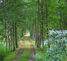 Rausa Road by tanmari