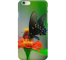 Beauty On a Zinnia Iphone Case iPhone Case/Skin