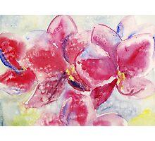 Orhids Photographic Print