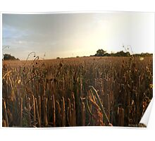 Evening countryside Poster