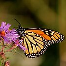 And yet another monarch..i'm doing a calendar..LOL by NewfieKeith