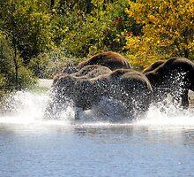 Splish Splash  by NewfieKeith