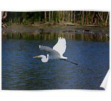 Egret In Flight Poster