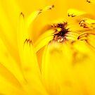 Yellow flower by Roma Czulowska