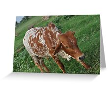 Cow in Africa Greeting Card