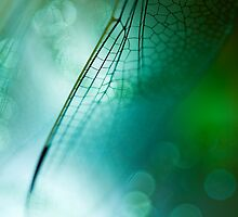 Dragonfly by ╰⊰✿Sue✿⊱╮ Nueckel