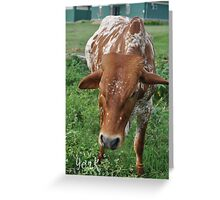 African Cow Greeting Card