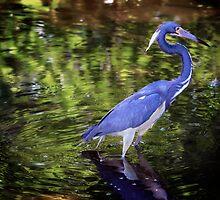 Great Blue Heron by Roma Czulowska