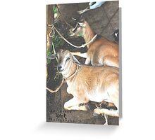 color animal  Greeting Card