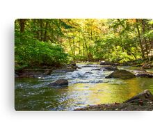 Black River Reflections Canvas Print