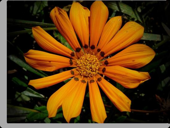 Just Orange by Lucinda Walter