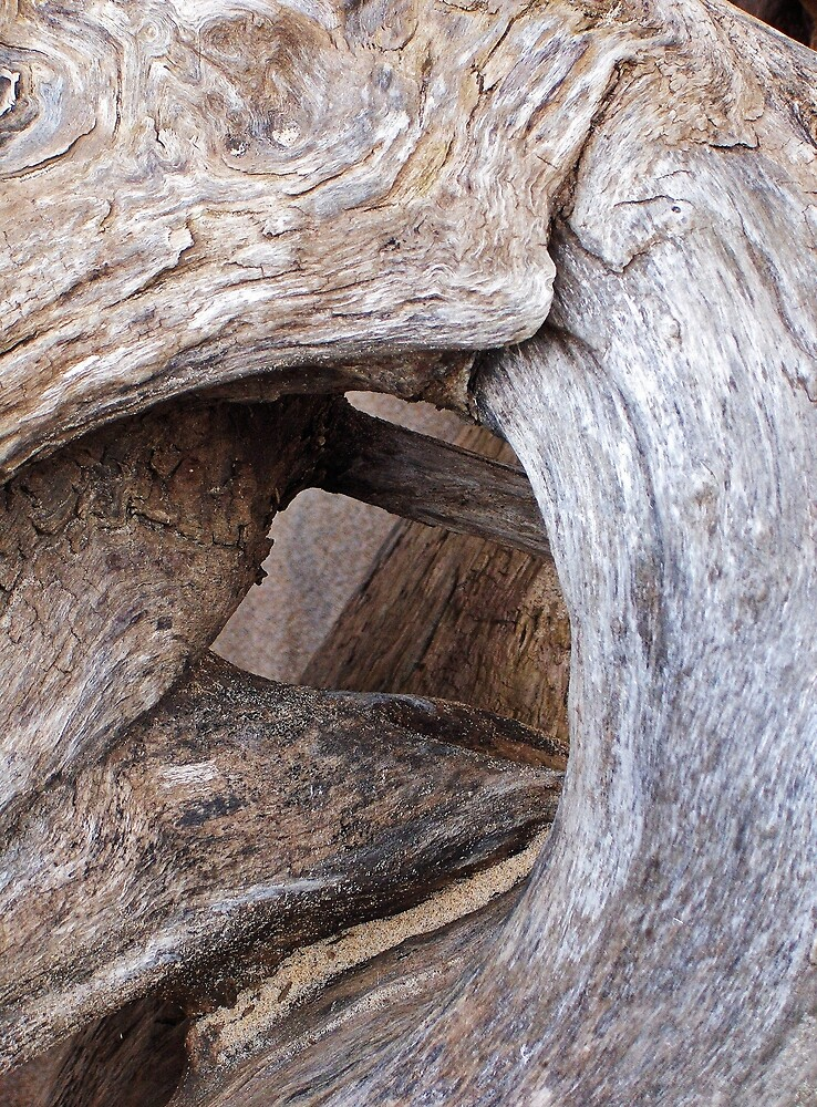Twisted Driftwood by Kathilee