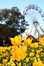 Sunny Tulips by NinaJoan