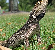 Little Bloke (#1) - Juvenile Bearded Dragon by Neil Ross