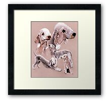 Bedlington Terrier Framed Print
