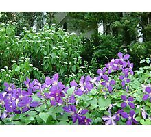 Purple Meadow Photographic Print