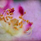 Spring Rose by KathyT